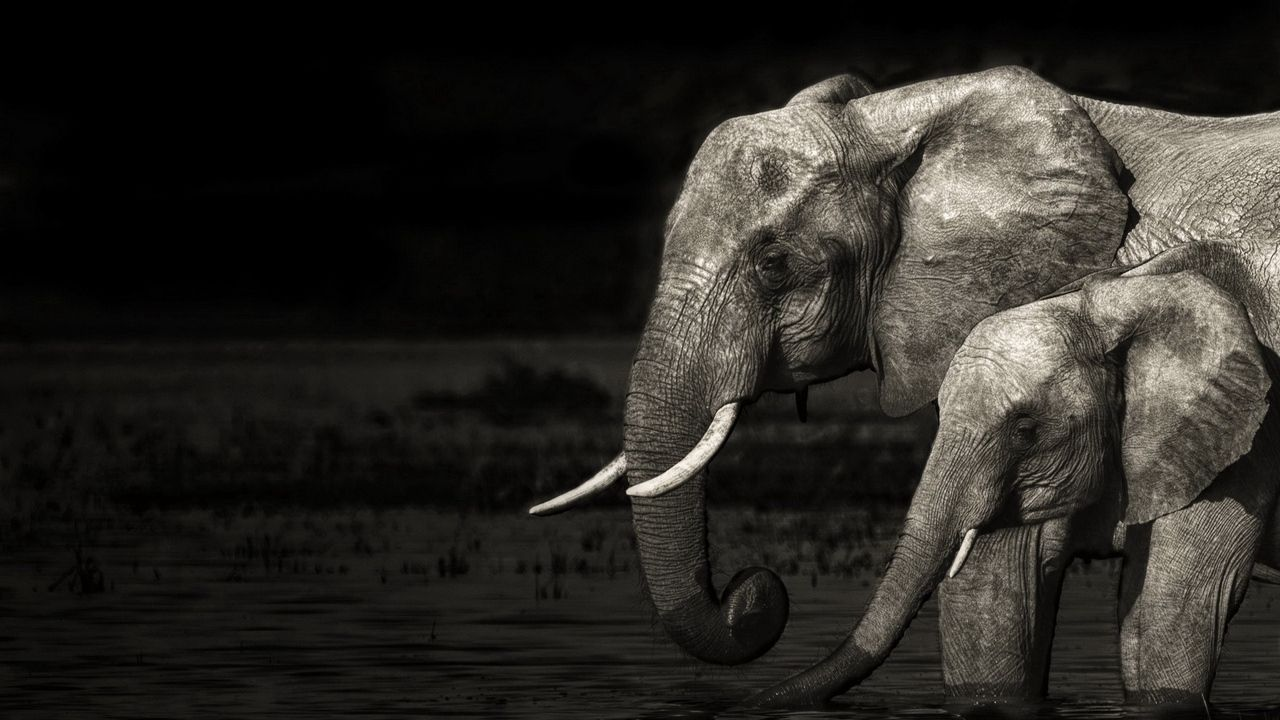 Black Elephant Wallpaper High Quality Resolution Elephant