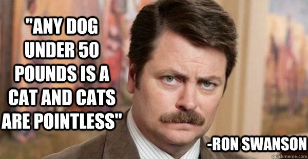 """""""Any dog under 50 pounds is a cat and cats are pointless ..."""