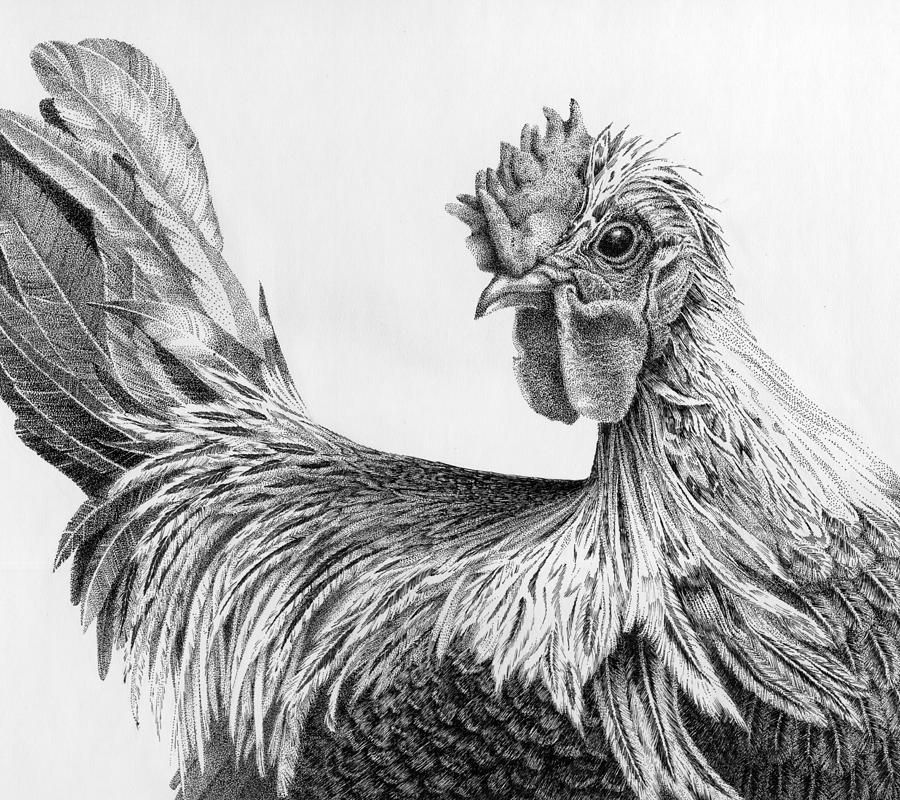 Regal rooster by carol livingston