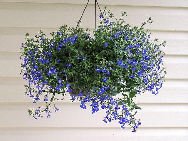 Hanging Basket Flowers Hanging Flower Baskets Plants For Hanging Baskets Hanging Garden