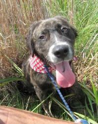 Adopt Sydney On Border Collie Dog Collie Border Collie