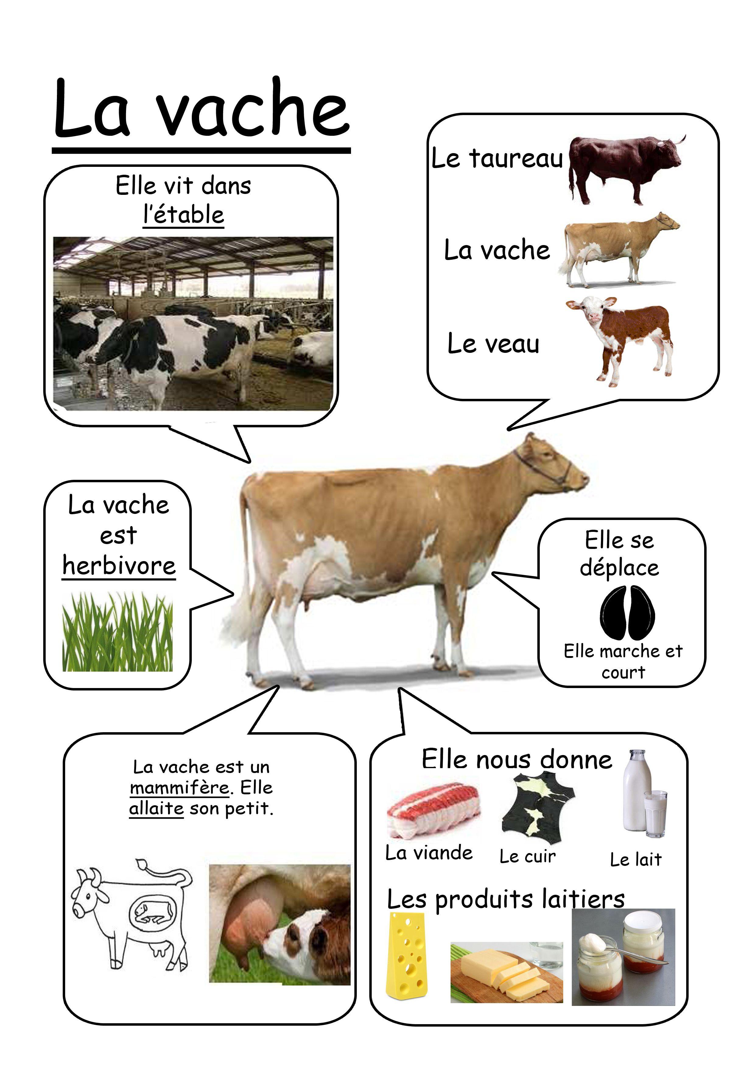 Vache animaux de la ferme learnfrench http www for Cuisine qui se ferme