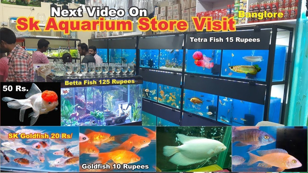 Sk Aquarium Store Visit Aquarium Fish With Price Details In Banglore Aquarium Fish Aquarium Store Tetra Fish