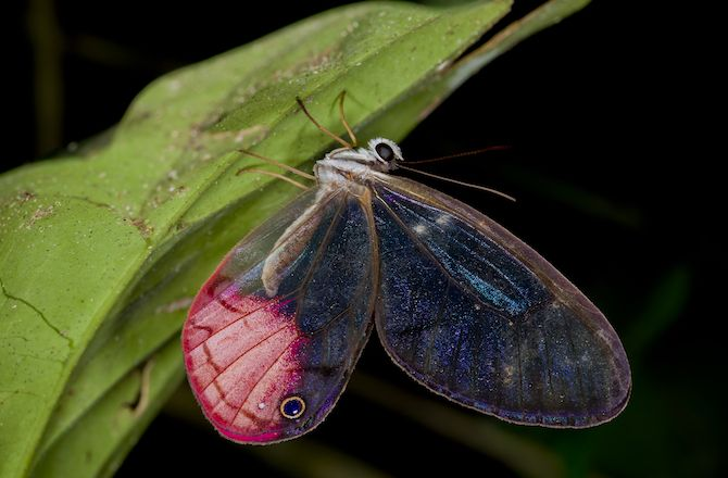 Boatloads of butterflies have just been tallied at a national park in Bolivia.