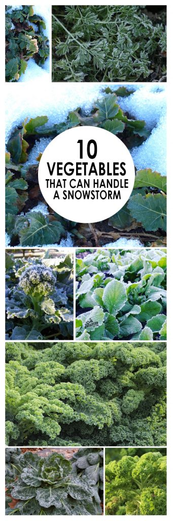 10 Cold Hardy Vegetables That Can Handle A Snowstorm