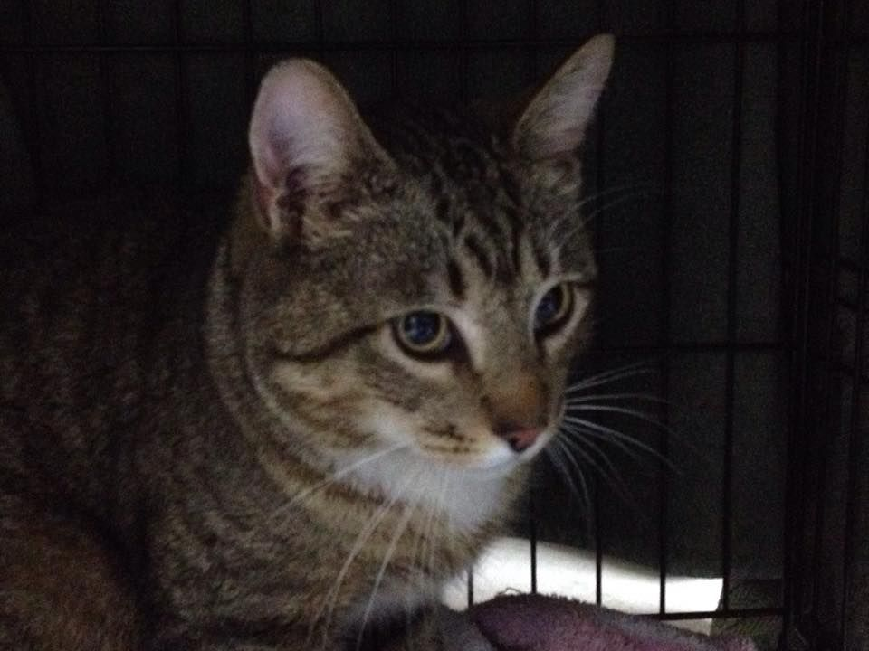Friendly Cats Found In North Haven Fix And Feed North Haven