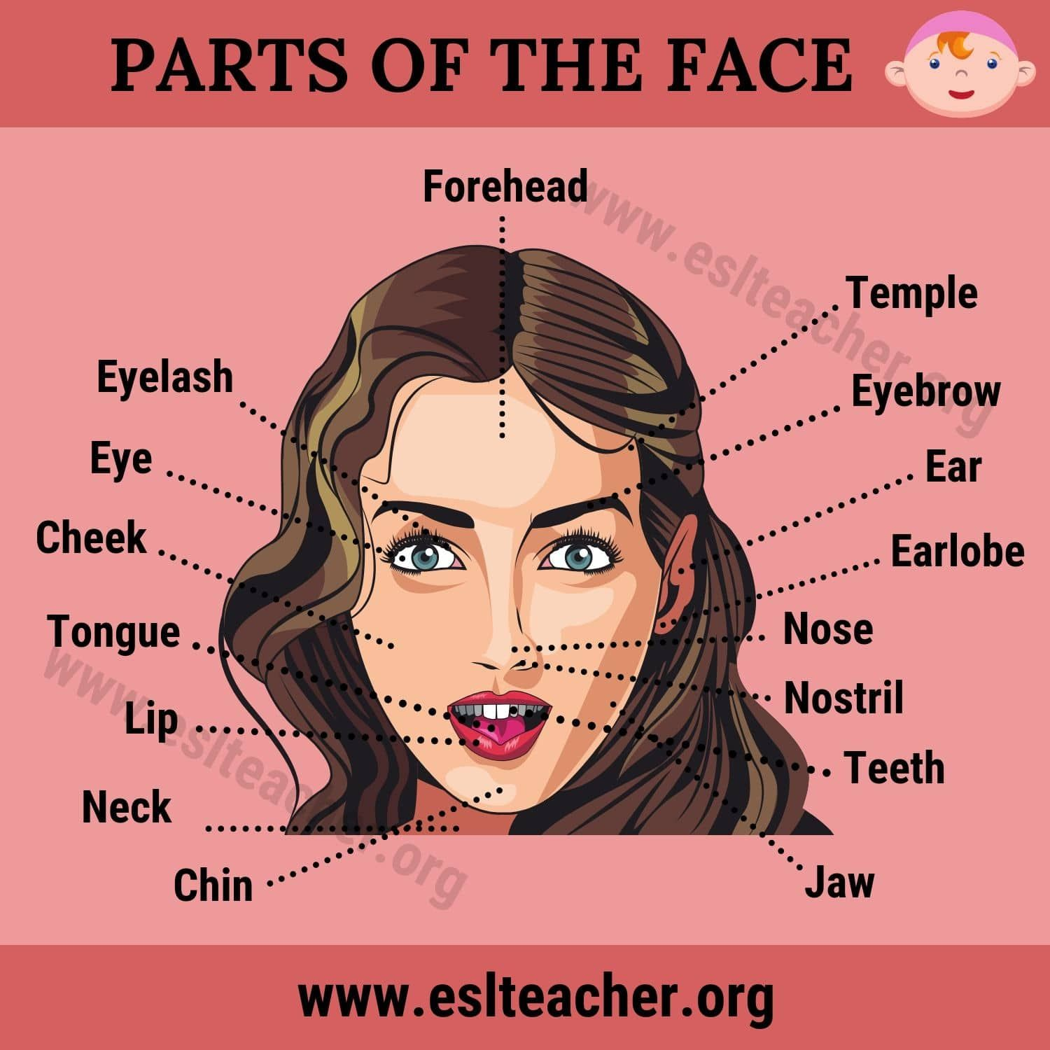 Parts Of The Face Useful List Of 15 Face Parts Names In