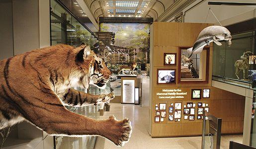 f641c14b18f0a7ac85fef382005e027f - How Do I Get To The Museum Of Natural History