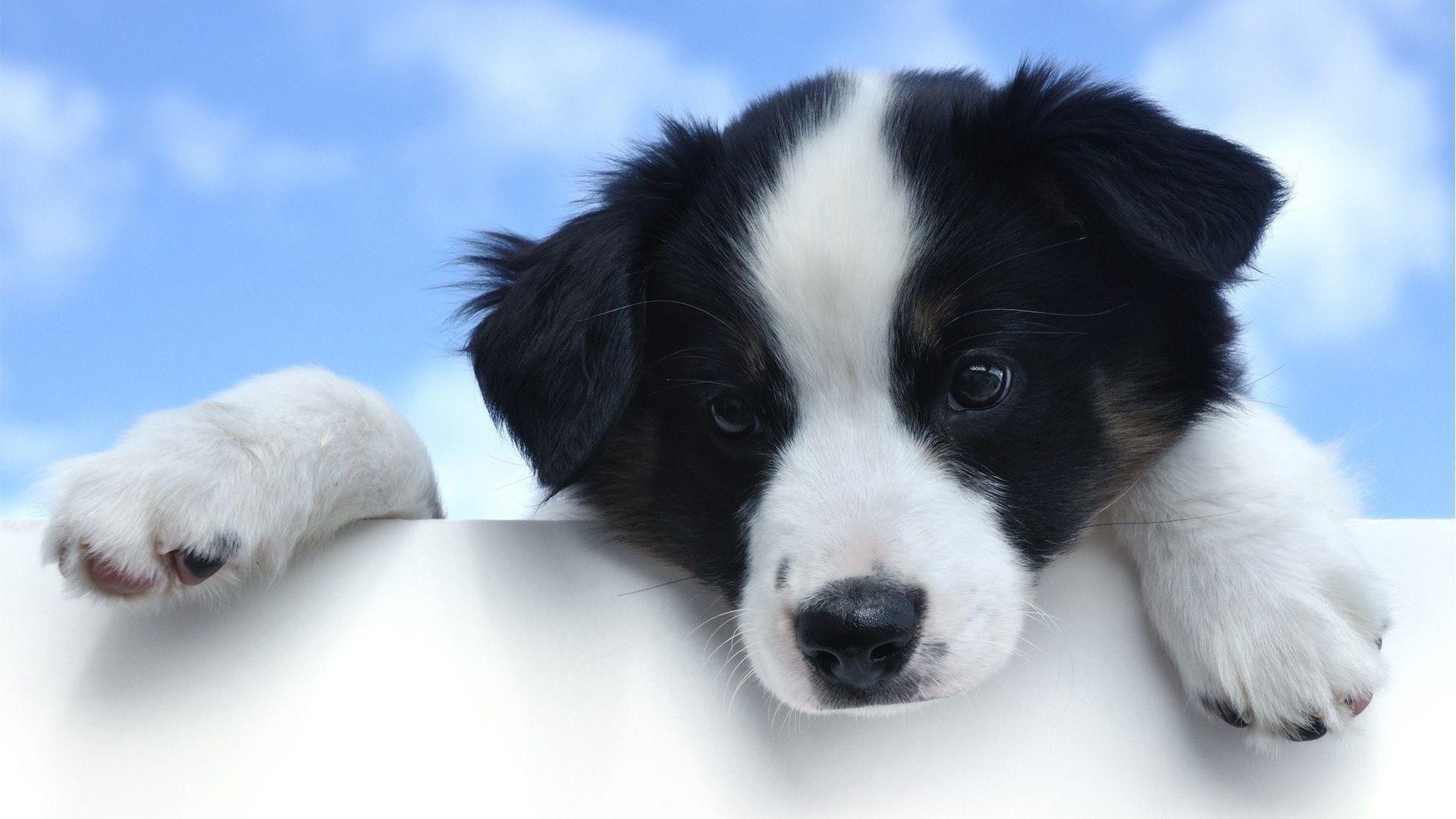 f6422ca6b200d4b26e223b18f6a79734 puppy in heaven religion pinterest dog wallpaper, dog and animal