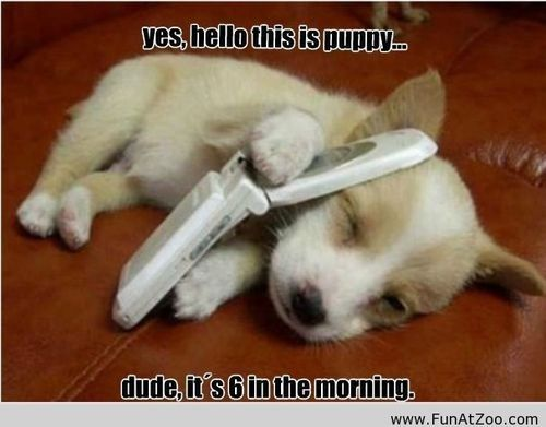 Funny Puppies With Sayings Google