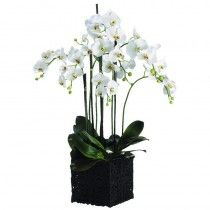 Edgar Orchid available at http://www.seniorfurnishings.com/