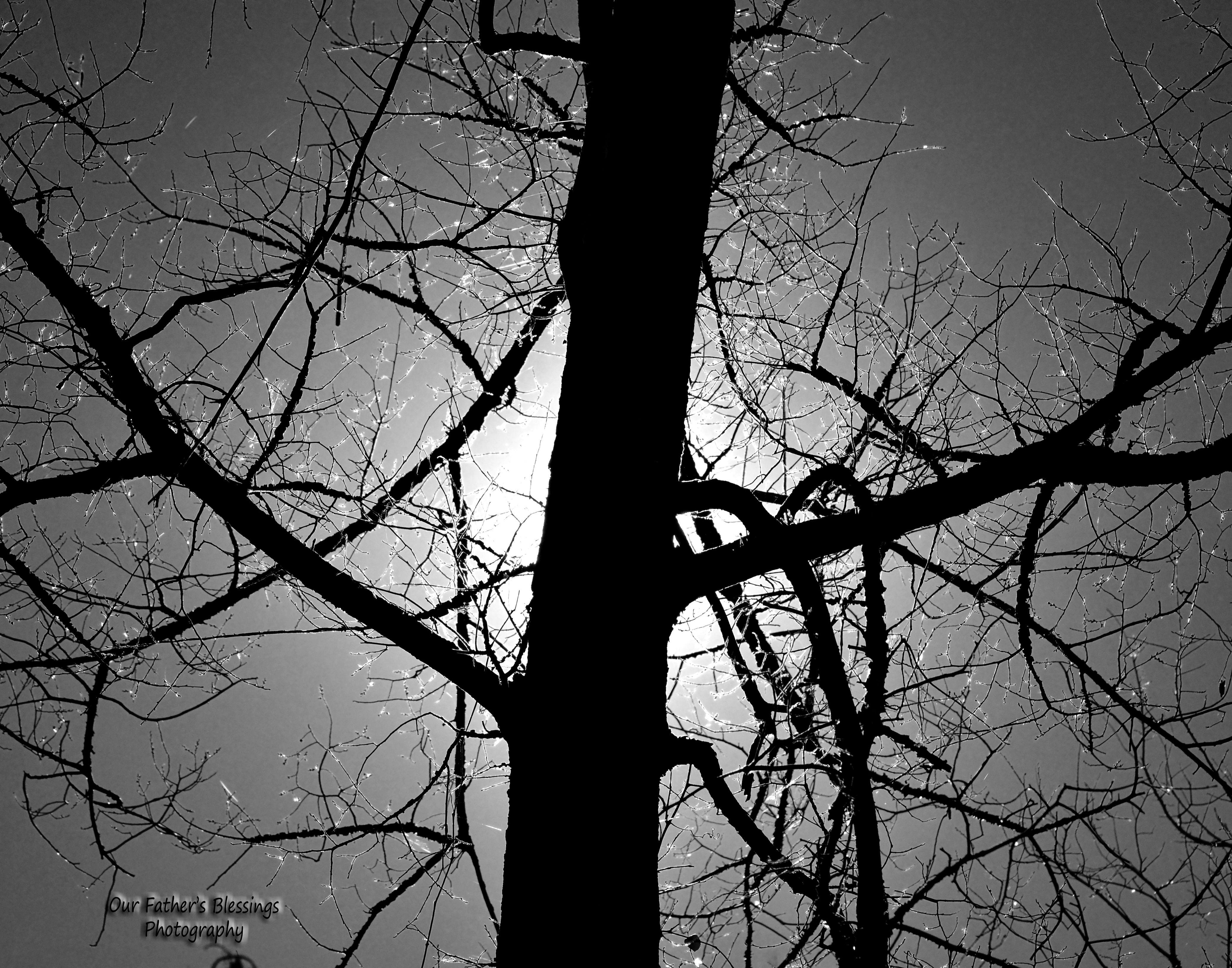 A Tree Glistening