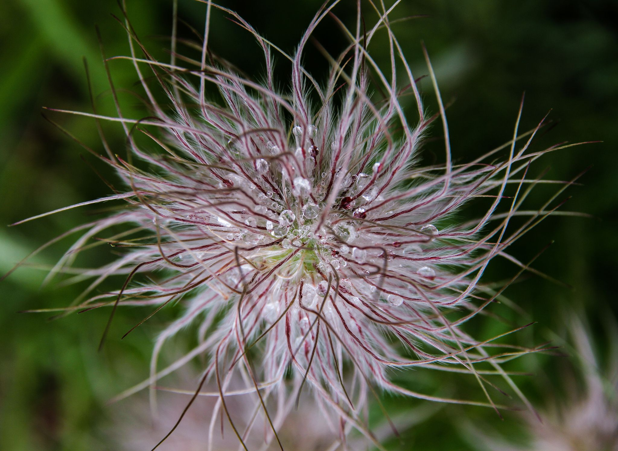 Amazing flower in the forest - Amazing flower in the forest