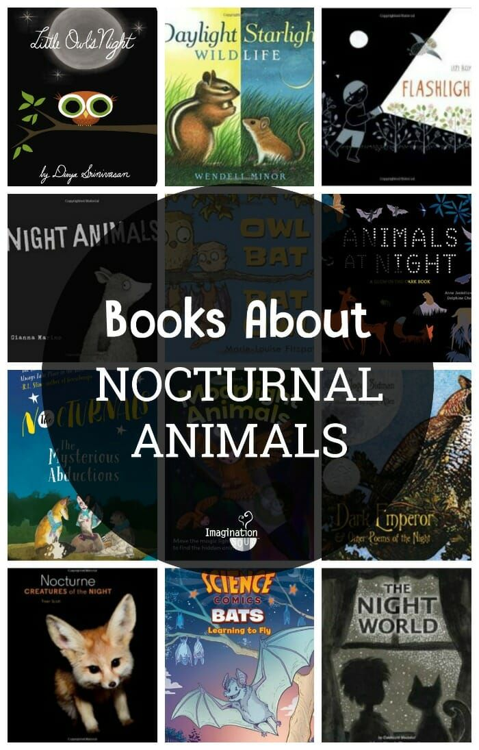 What's in the Dark? 14 Books About Nocturnal Animals