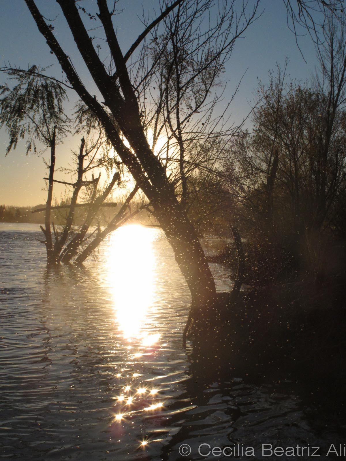 Balneario La Herradura, Plottier, provincia de Neuquén, Argentina. Las pequeñas mosquitas sobre vuelan las aguas del Río Limay mientras el sol se pone y las hace brillar como pequeñas luces.