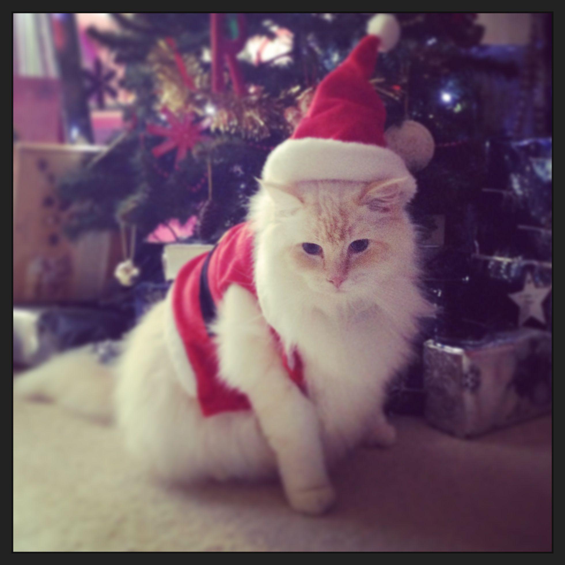 My grumpy cat christmas