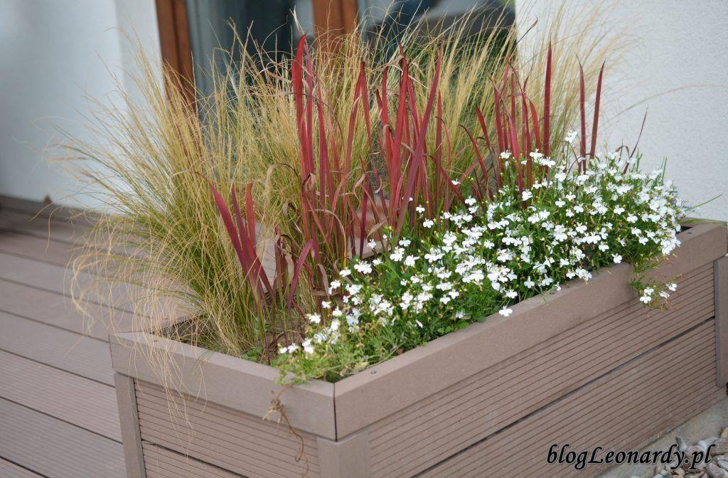 Kompozycje Tarasowe W Donicach Jak Zaaranzowac Donice Balkonowe Container Gardening Plants Garden