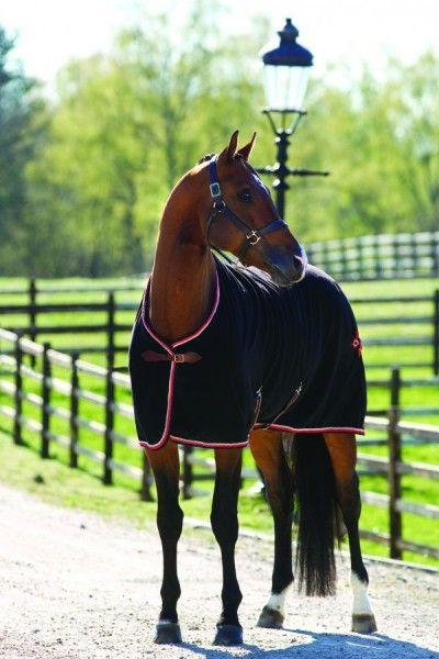Horses Beautiful Horse