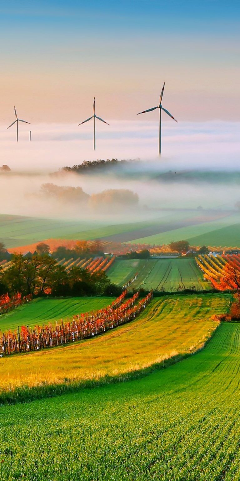 اجمل خلفيات موبايل في العالم Hd Tecnologis Field Wallpaper Vineyard Art Landscape