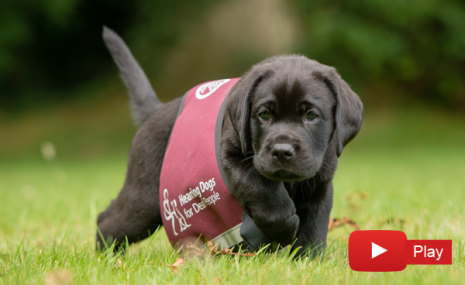 Hearing Dogs For Deaf People Train Hearing Dogs Who Change The Lives