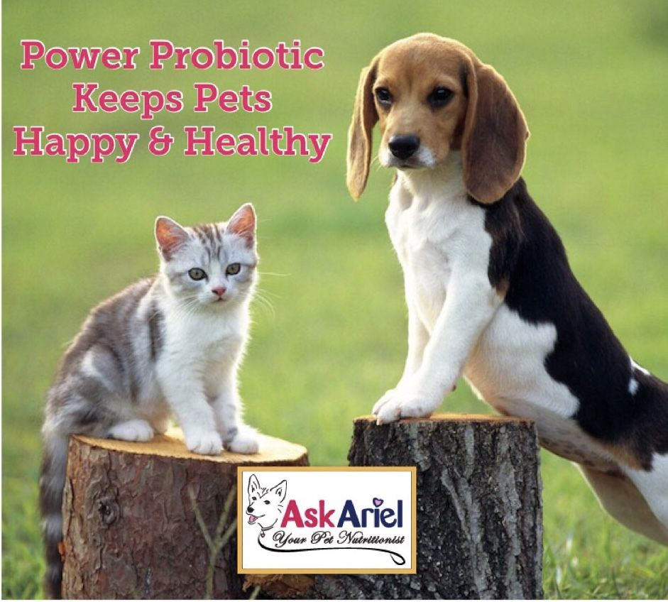 Natural Probiotics For Dogs Cats Ask Ariel Cute Beagles