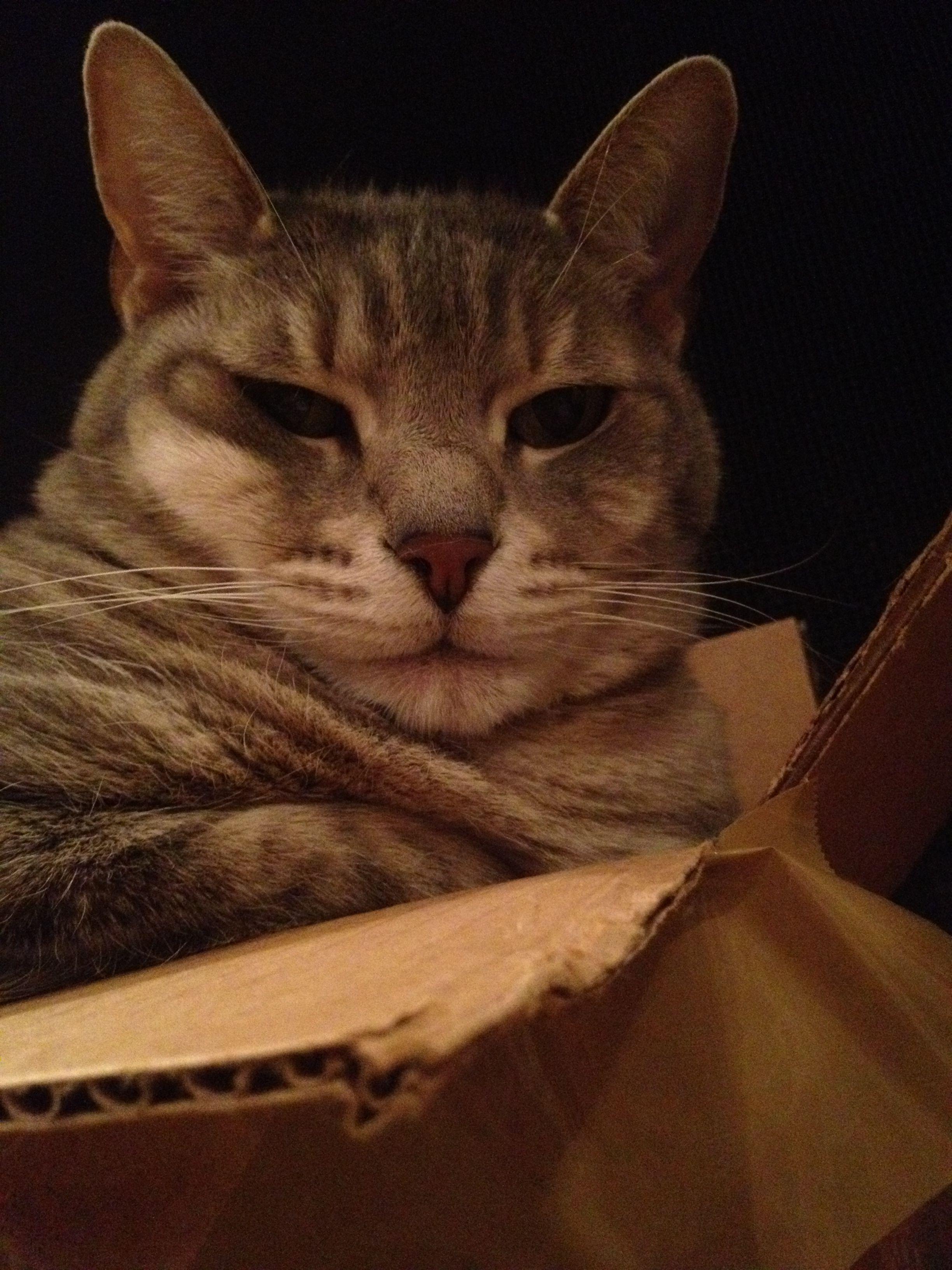 Soft serve cat.