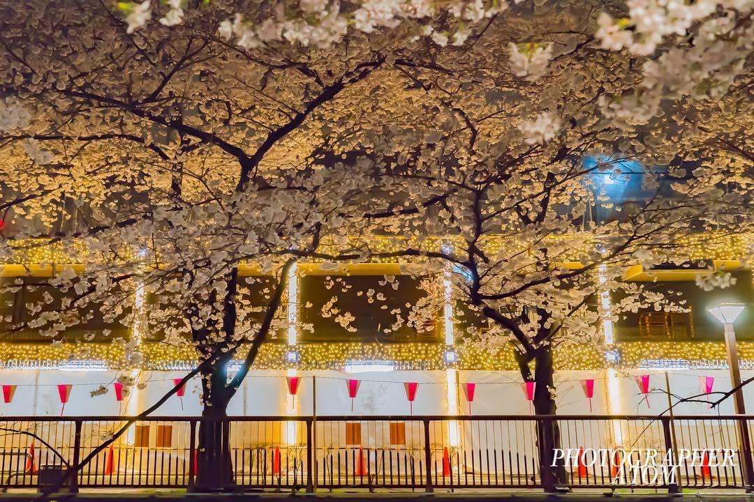 """Mi piace"": 32, commenti: 1 - Photographer ATOM (@photographer_atom) su Instagram: ""Travel around the world. Japan TOKYO SAKURA #natgeo #natgeotravel #YourShotPhotographer #bbctravel…"""