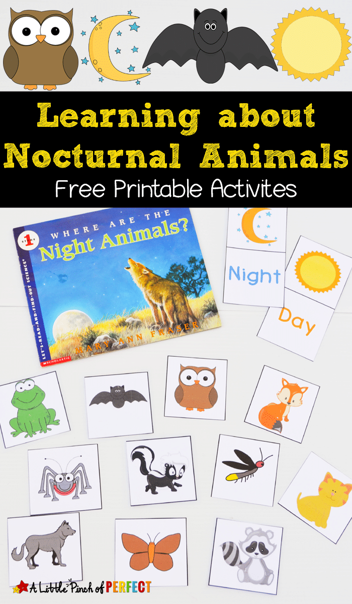 Free Nocturnal Animals Printables Nocturnal Animals Activities Nocturnal Animals Animal Activities [ 1200 x 700 Pixel ]