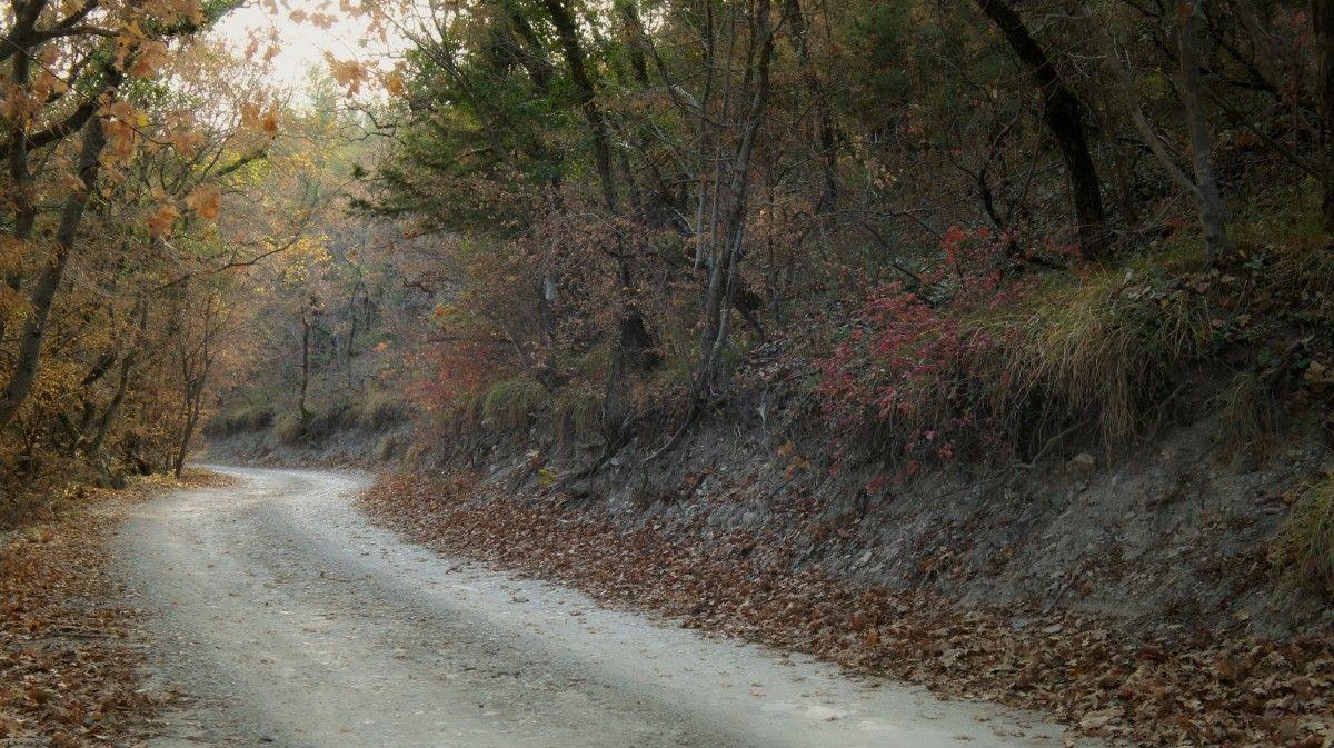 صورة عالية الدقة خالية من الطريق والغابات الخريف أوراق الشجر الأشجار شجرة الطبيعة ورقة الطبيعية Country Roads Photo Road