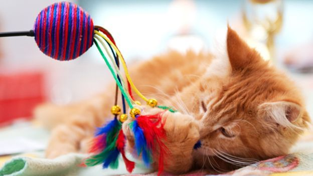 Come far felice un gatto in quattro mosse