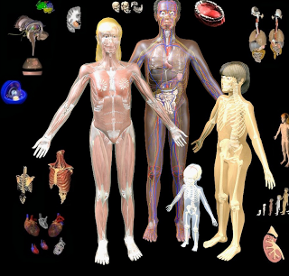 BodyMaps- A Great Tool to Explore Human Body in 3D ~ Educational ...