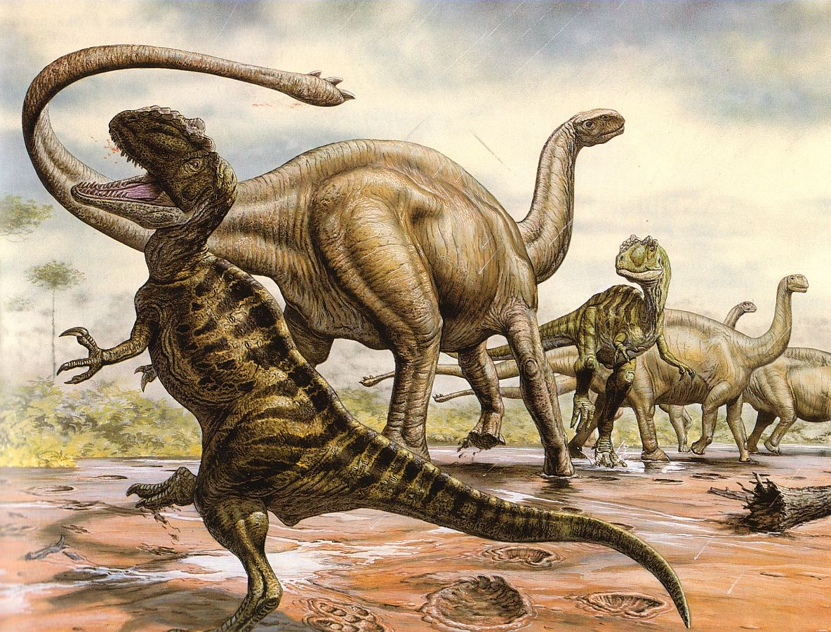 Yangchuanosaurus (Metriacanthosaurus), a carnivorous theropod dinosaur (left) and Shunosaurus, a sauropod (right) from the Cretaceous era of Asia. Description from sciencephoto.com. I searched for this on bing.com/images