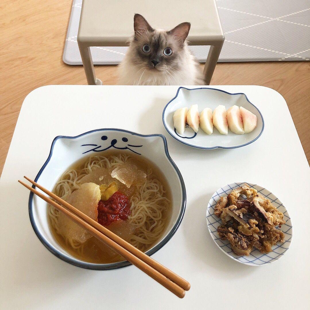Pin de 𝖂𝖊𝖉𝖓𝖊𝖘𝖉𝖆𝖞 ☠︎ en kittens Comida, Comida bebida