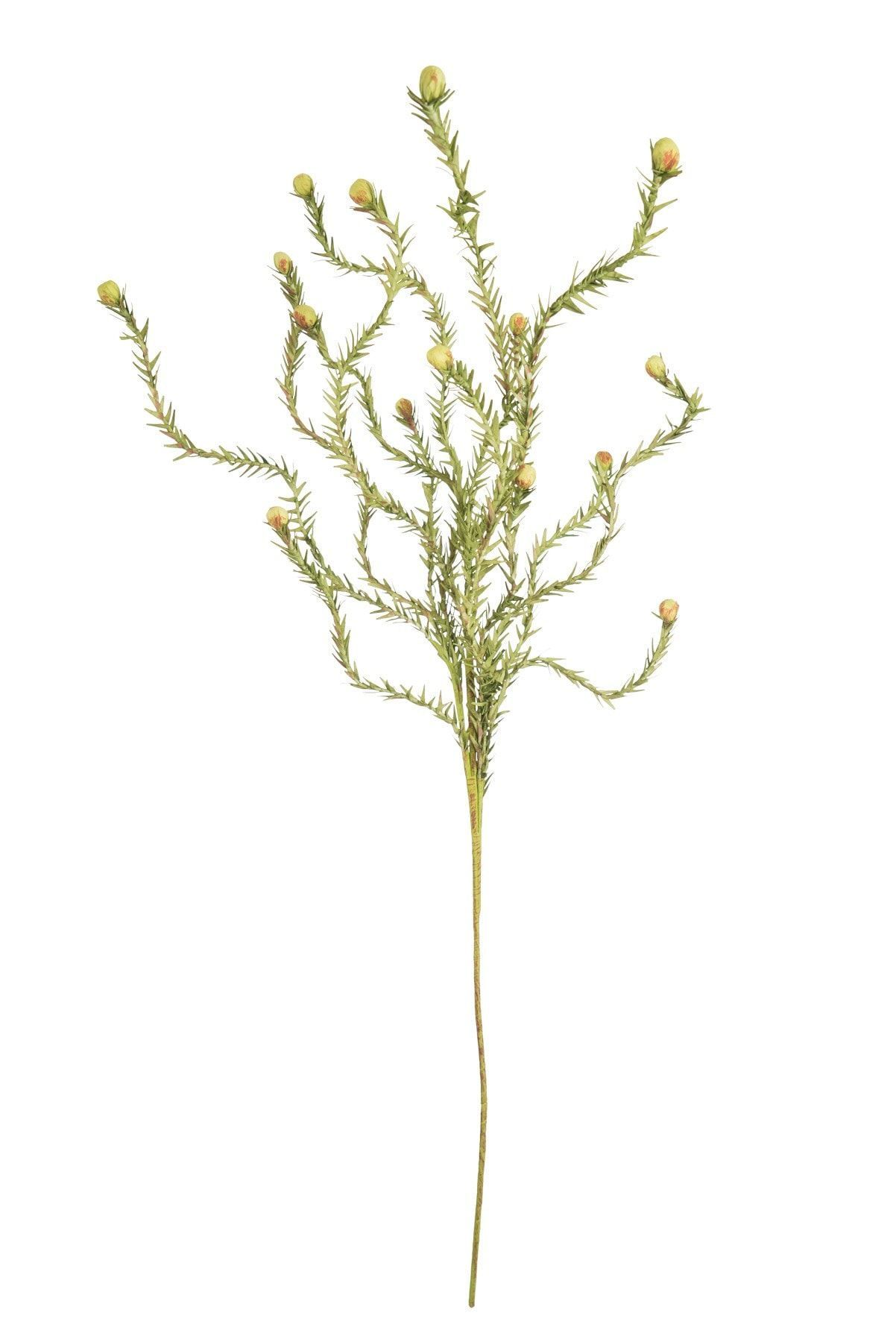 Botanica #2124 | Botanica, Botanical drawings, Rustic ...