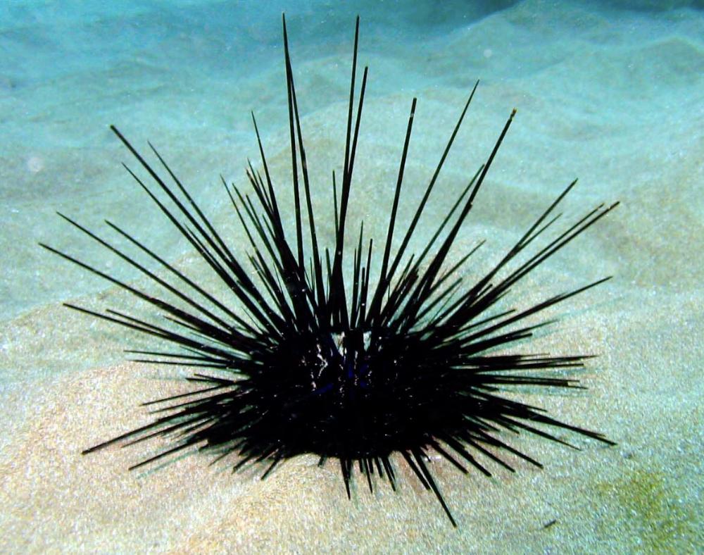 Sea Urchin Ocean Creatures Life Under The Sea Sea
