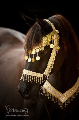 Araber - Pferdefotografie, Hundefotografie, Fotografie Bettina Niedermayr…