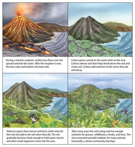 How ecosystems change ecological succession welcome to mrs sandoval   awesome science page also rh pinterest
