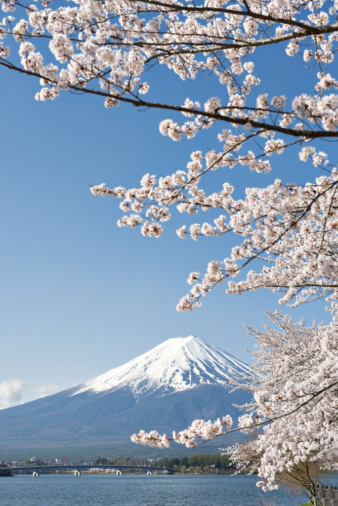 When To See Japan's Cherry Blossom Trees in Full Bloom