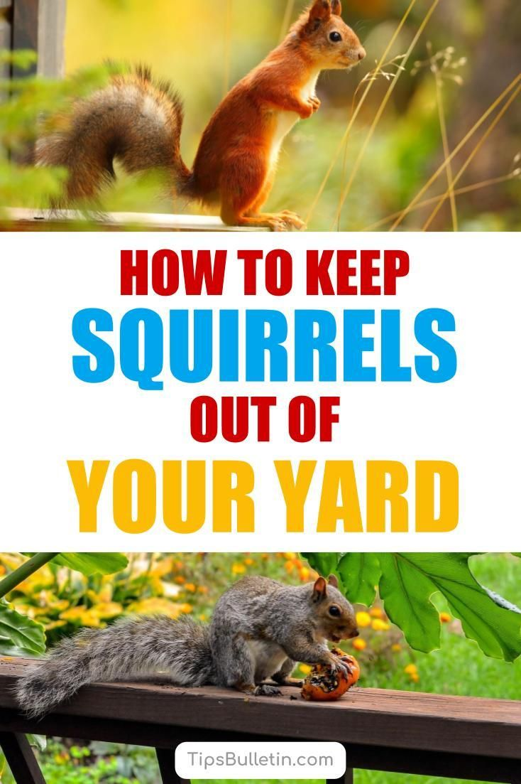 17 incredibly easy ways to keep squirrels out of your