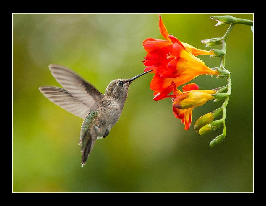 Delicate hummingbird delights the eye. Hummingbird