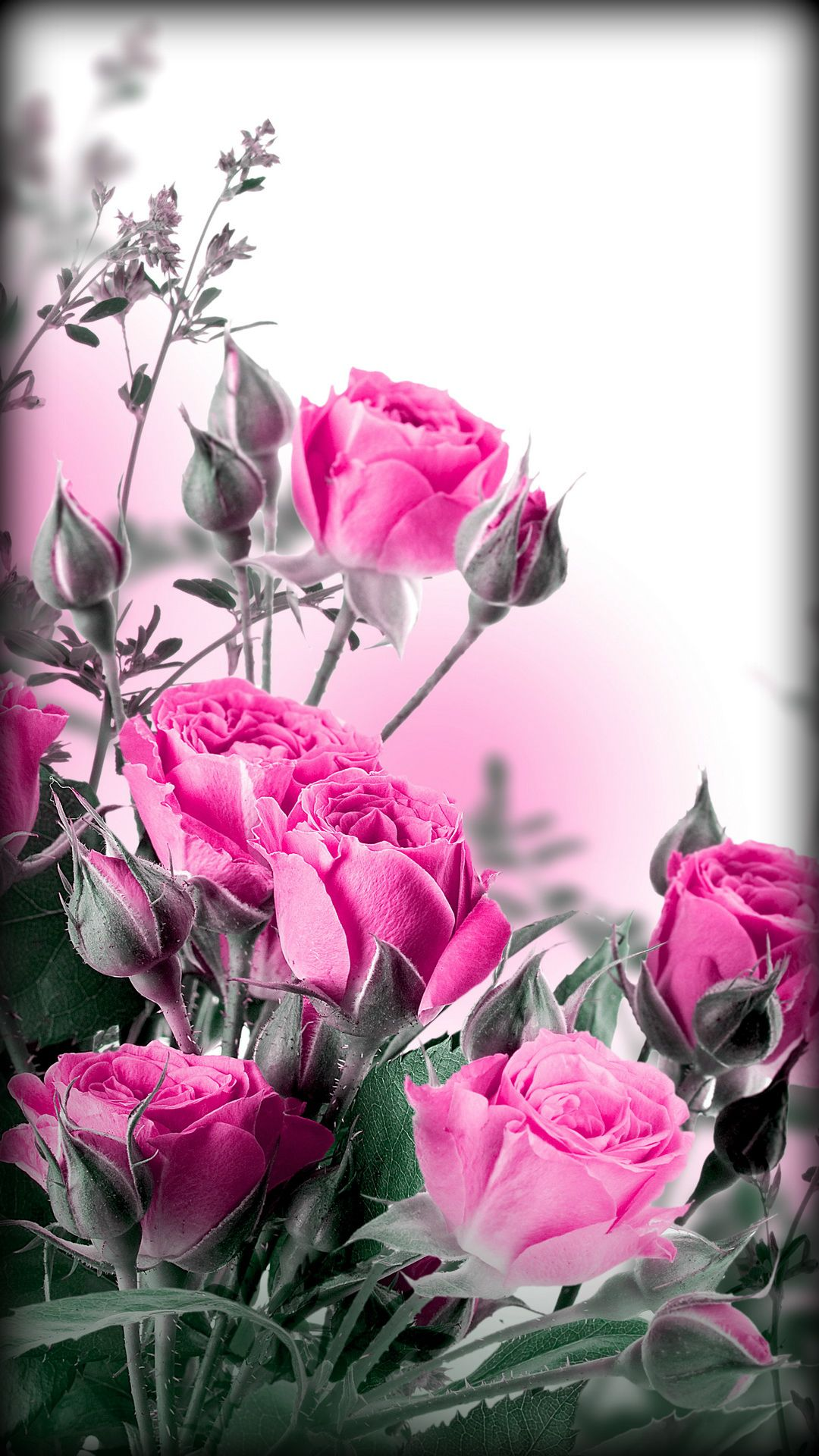 Pink Roses Rose Wallpaper Flower Wallpaper Flowers