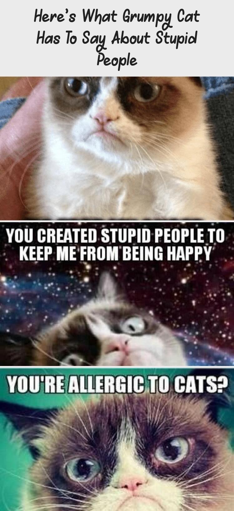 Photo of Esto es lo que Grumpy Cat tiene que decir sobre las personas estúpidas