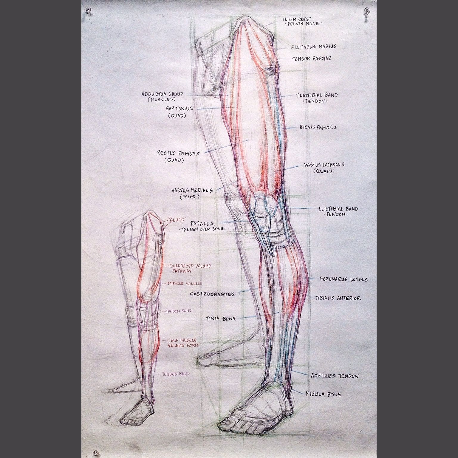 Pin By Gary Geraths On Figure Leg Anatomy Bone And Muscle