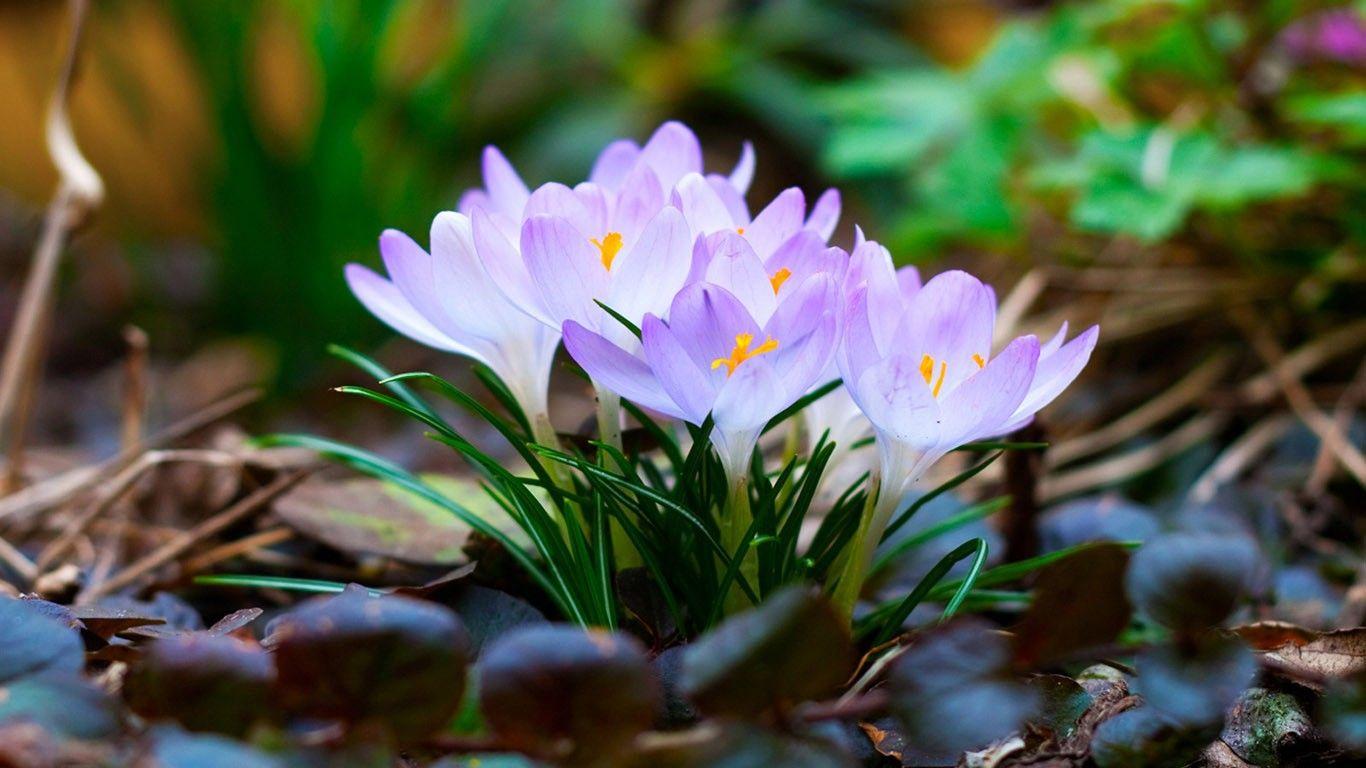 Nature Flower Wallpaper Photo For Desktop Background