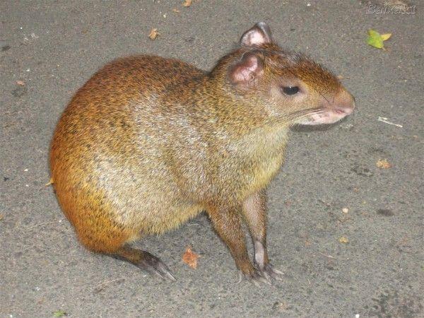 10 Animais Estranhos Do Brasil Animais Animais Animais
