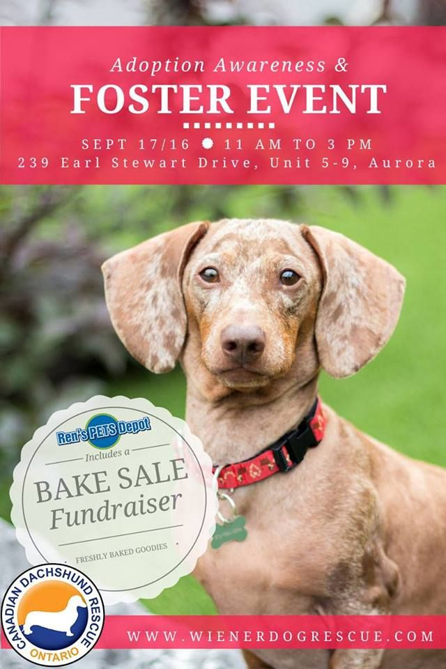 Aurora Sept 17 2016 Please Mark Your Calendars For Saturday September 17 2016 From 11 Am Until 3 Pm It S Time For A Bake S Adoption Awareness Event Pets
