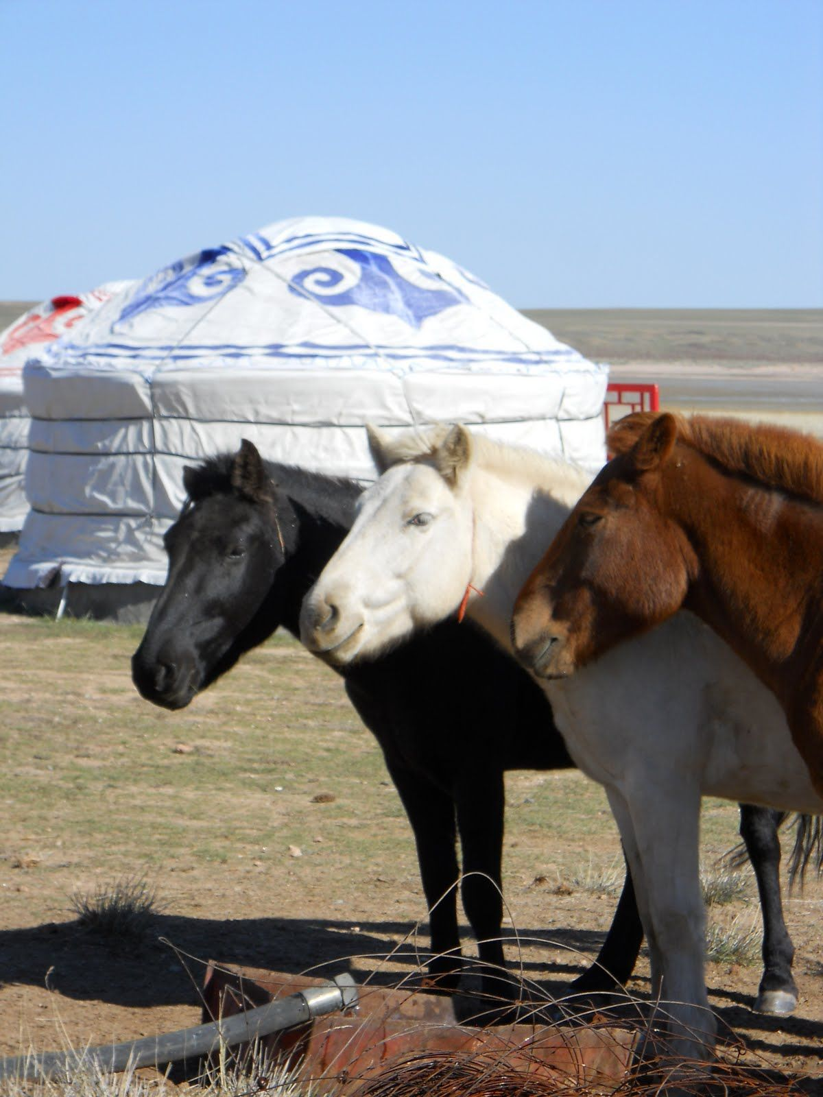Diane Daniel S Blog Mongolian Grasslands Horses Mongolian People Most Beautiful Animals They are a sturdy, reliable type of tent. mongolian grasslands