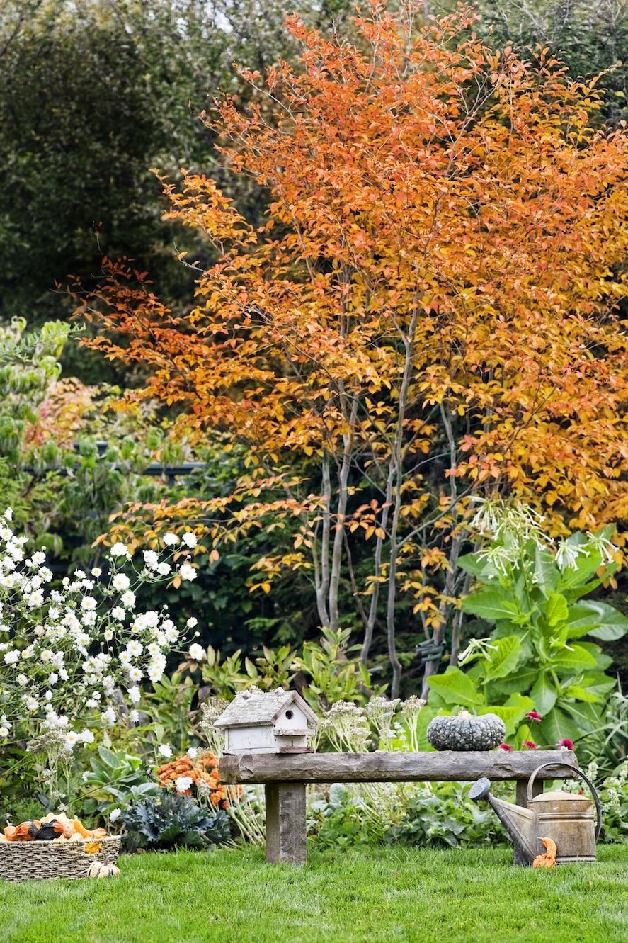 This Old House — Late-Season Garden Sensation Carved out of an ...