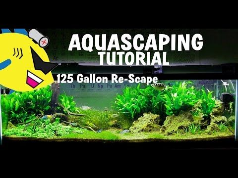 AQUASCAPING TUTORIAL   How To Aquascape   125 Gal Re Scape   YouTube