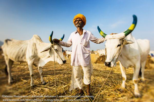 Proud Indian Farmer, Pushkar, India | Mlenny Photo ...